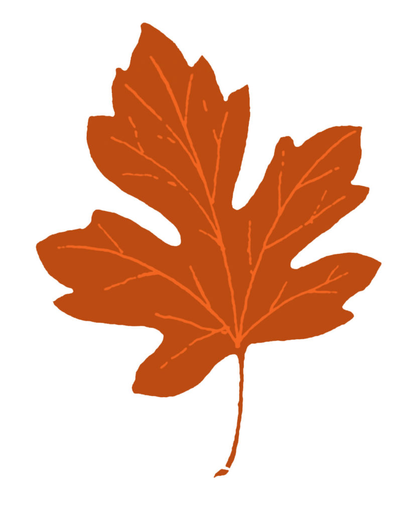 vintage orange maple leaf clipart