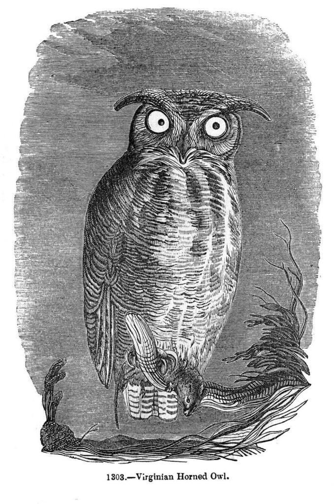 spooky owl black white engraving