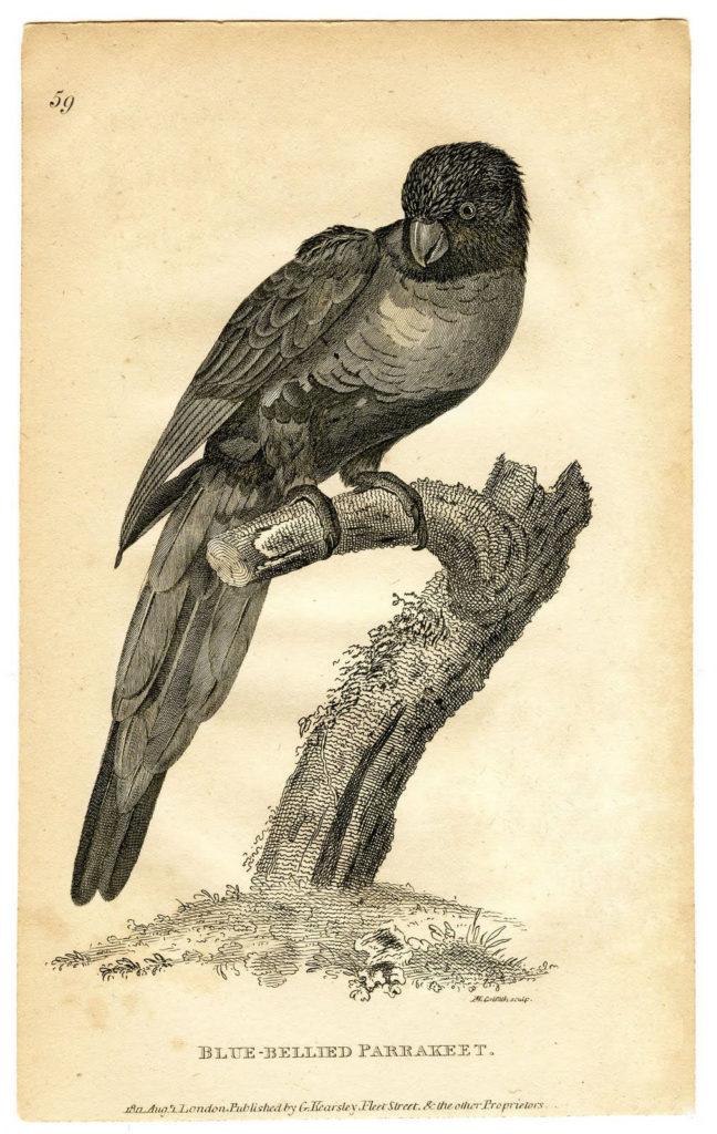 vintage parrot branch image
