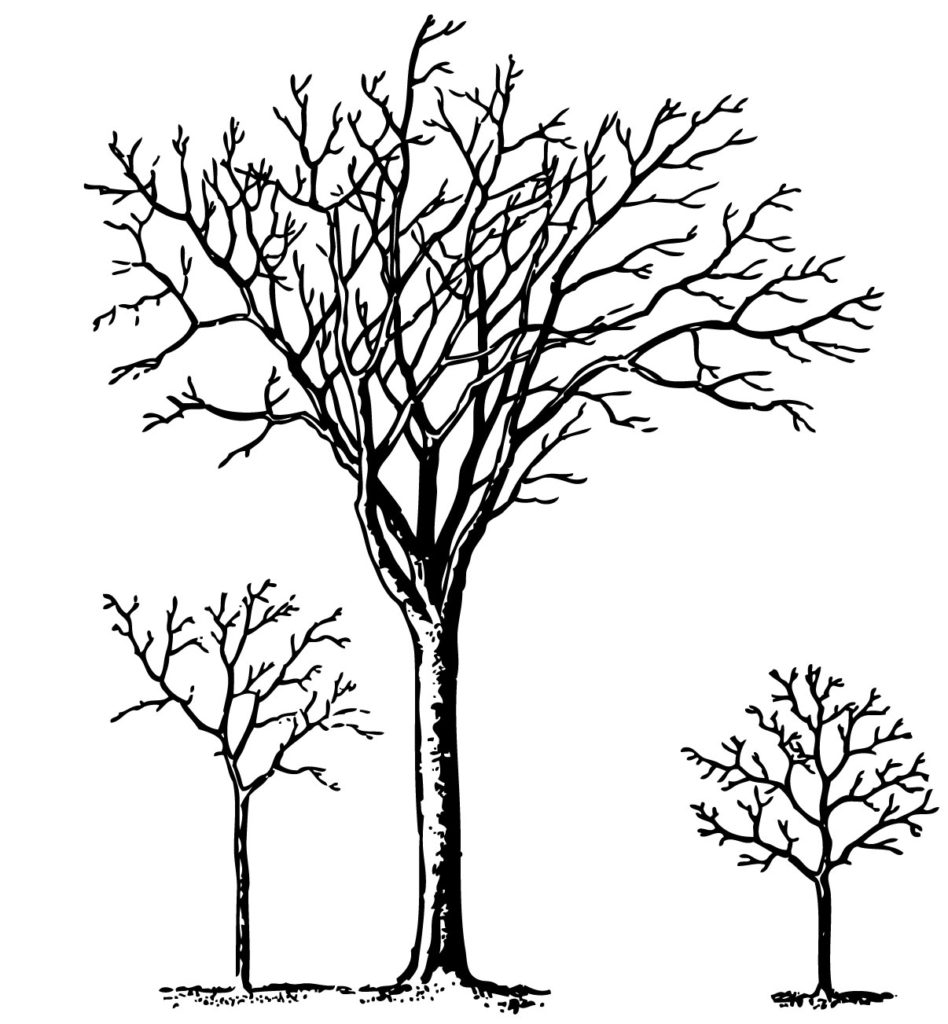 trees winter clipart