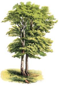 Vintage Tree Image