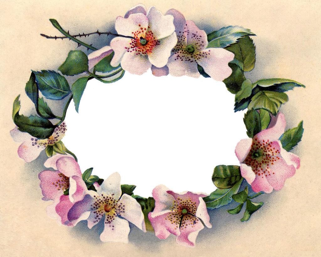 wild rose vintage image