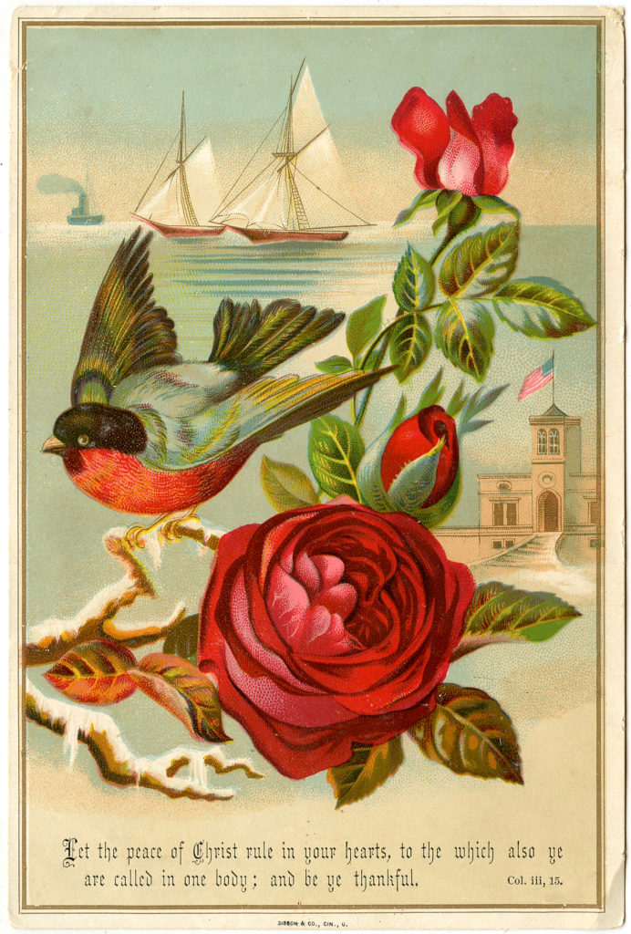 Red Rose Bird Robin Ships Illustration