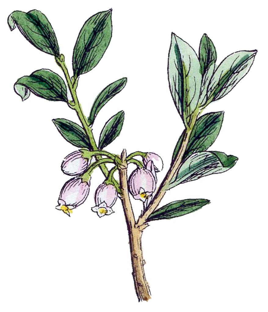 Vintage Botanical Wild Flowers Image