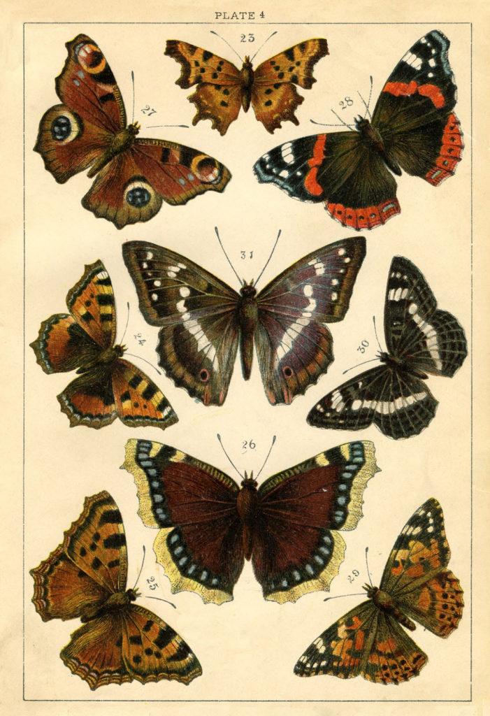 Vintage Butterflies Moths Illustration