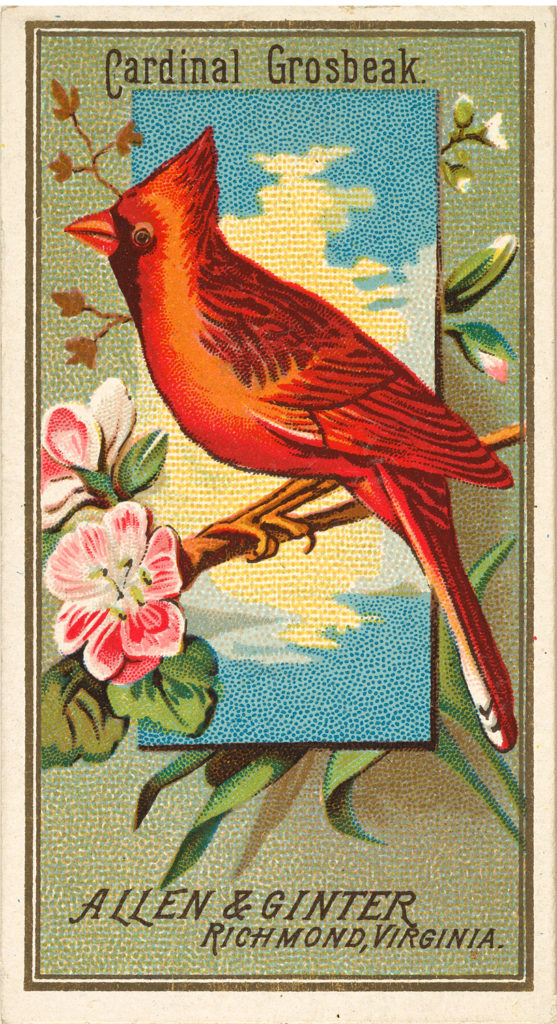 Cardinal Bird Ad Card
