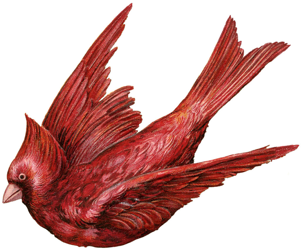 red cardinal flying clipart