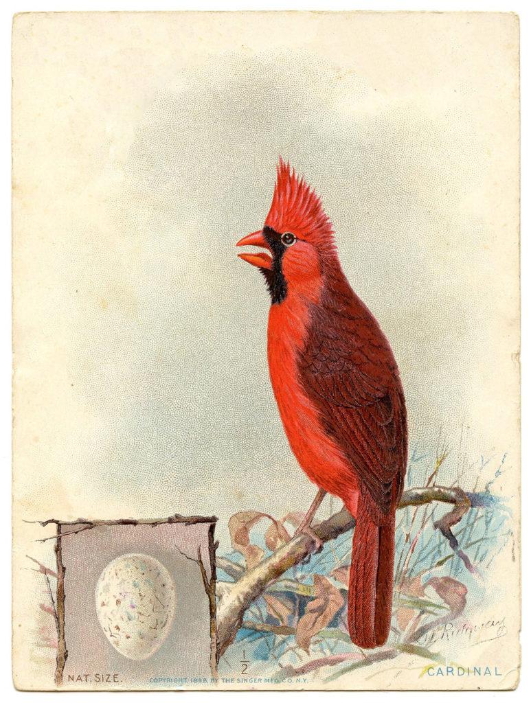 vintage cardinal egg perched image