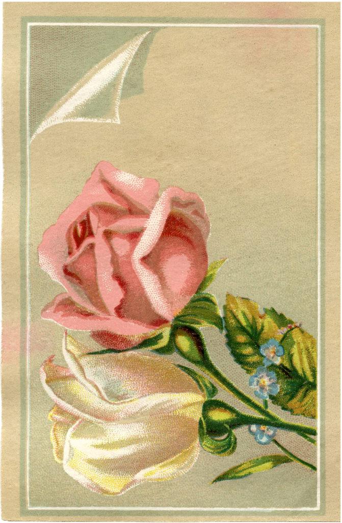 shabby vintage roses image