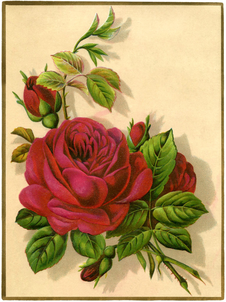 Red Rose Clipart