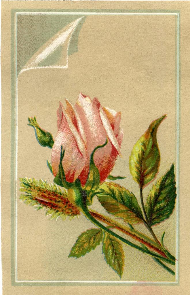 vintage rosebud pink clipart