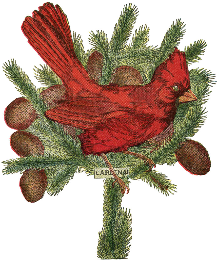 holiday cardinal pine cones illustration