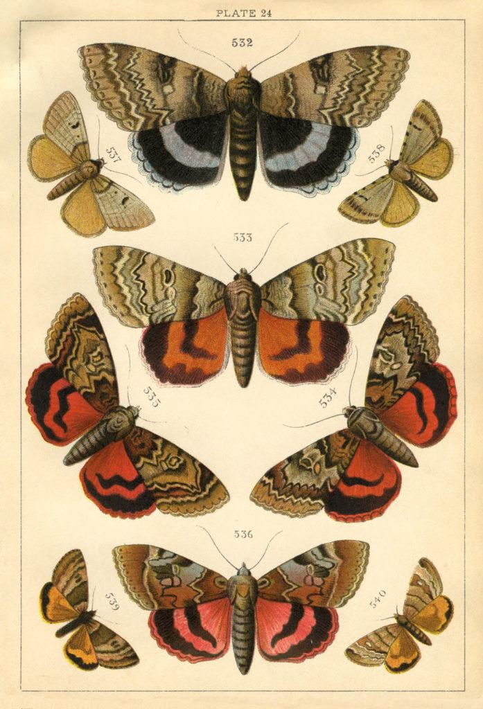 Vintage Orange Moths Clipart