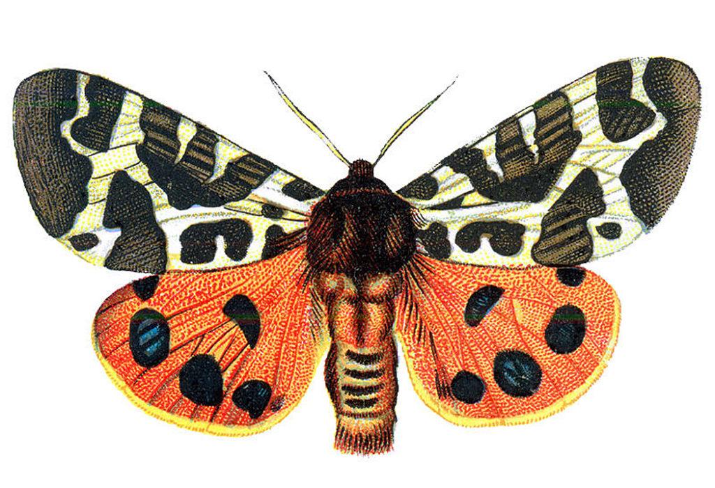 orange moth halloween image