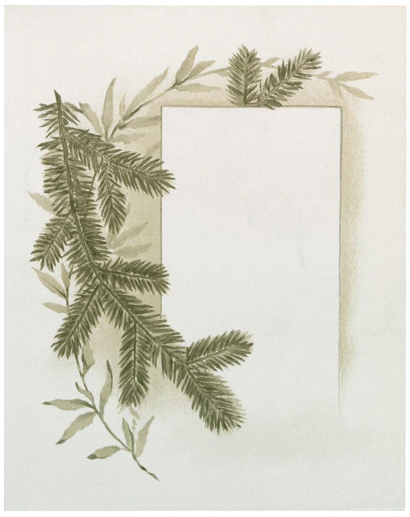 pine branch label clipart