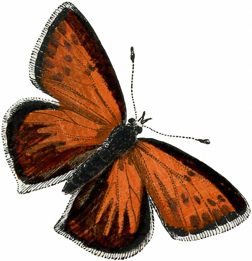 Vintage Orange Butterfly Clipart