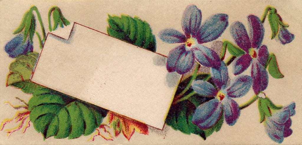 Violets Calling Card Image