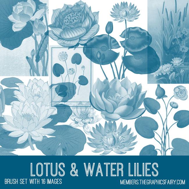 vintage lotus & water lilies brush set