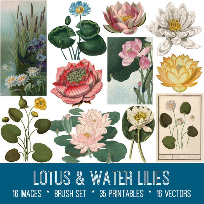 lotus & water lilies vintage images