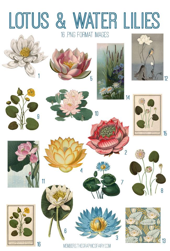 vintage lotus & water lilies digital image bundle