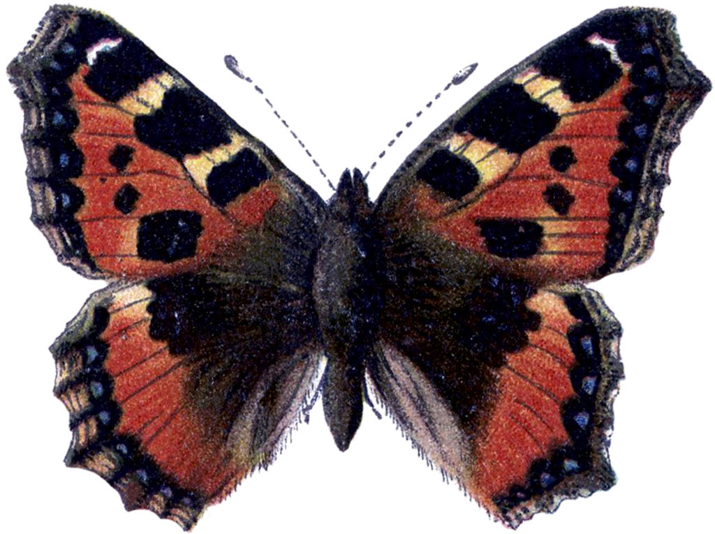 Orange Black Butterfly Clipart