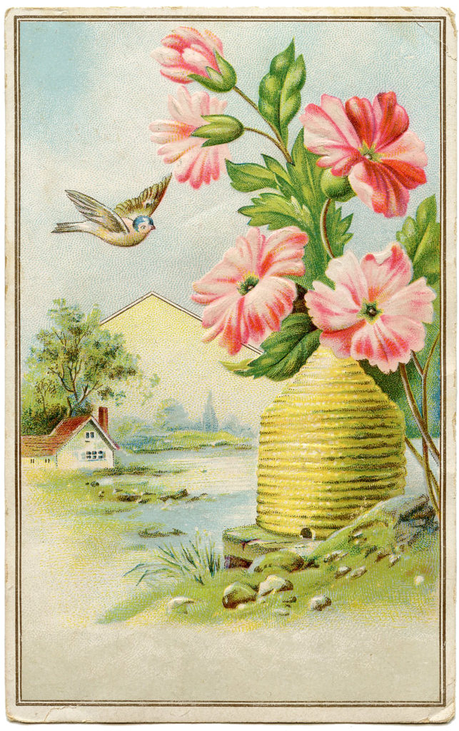 beehive bird vintage image