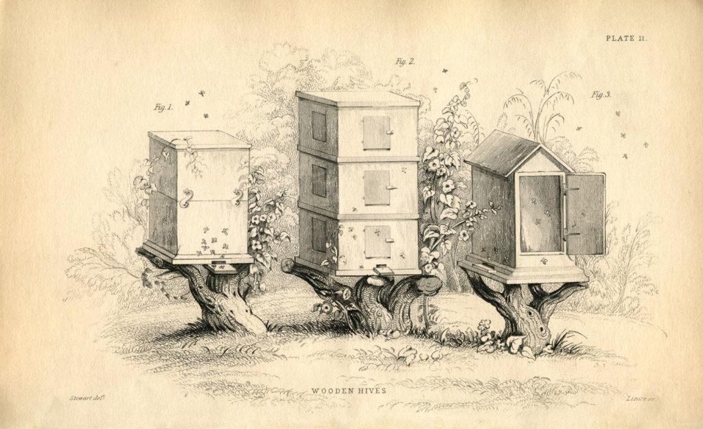 bee box beehive sepia image