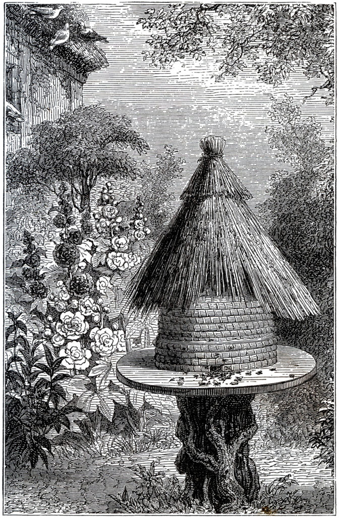 early beehive garden image