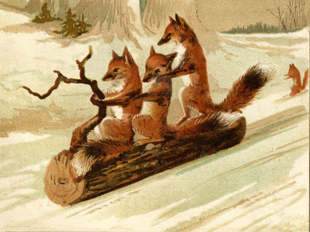 foxes on log sled sledding image
