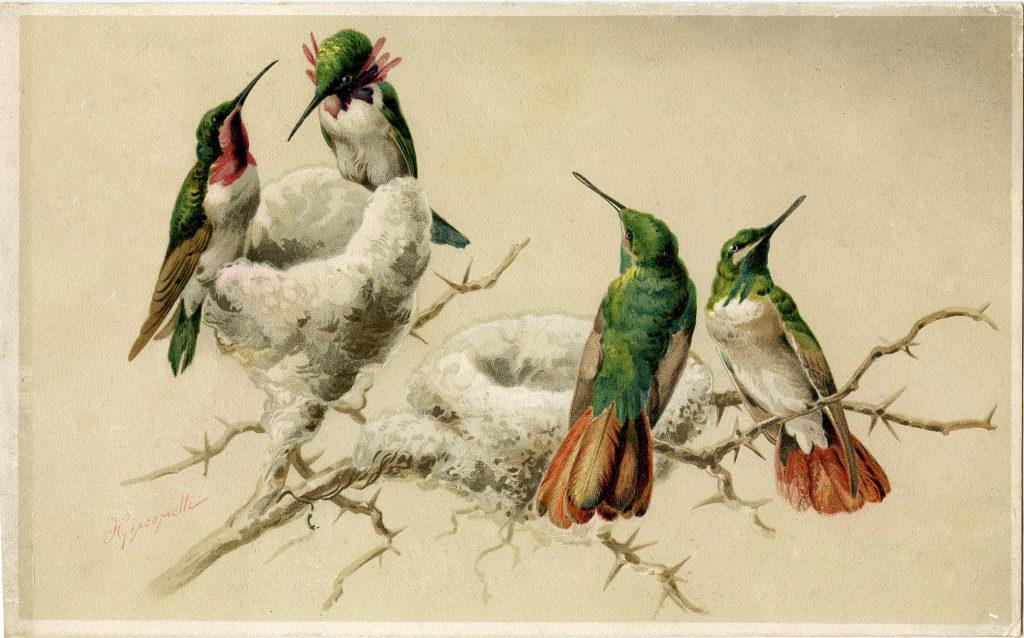 hummingbirds nest clipart