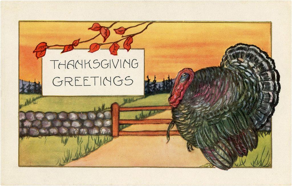 Thanksgiving Turkey Postcard Image