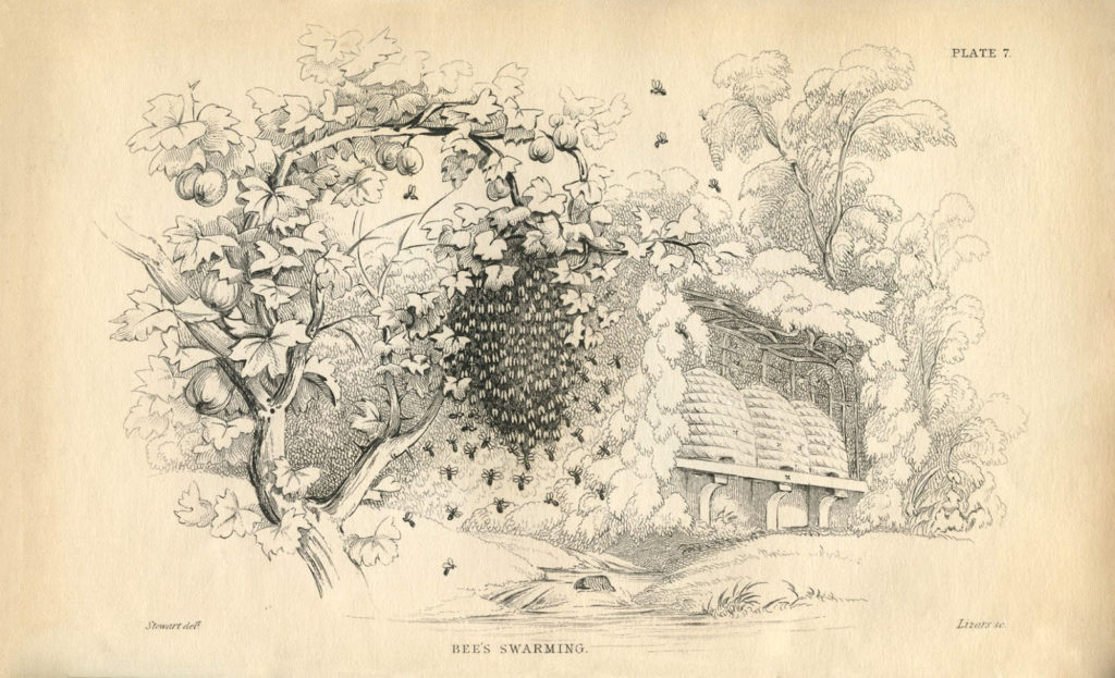 vintage beehives bees image