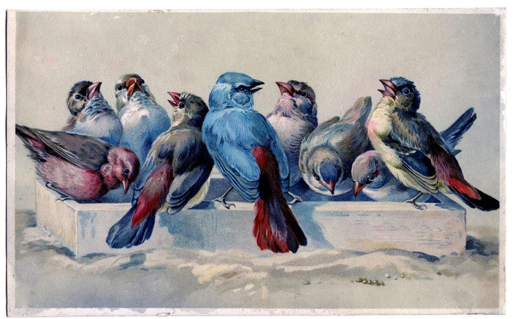 flock birds feeding hector giacomelli image