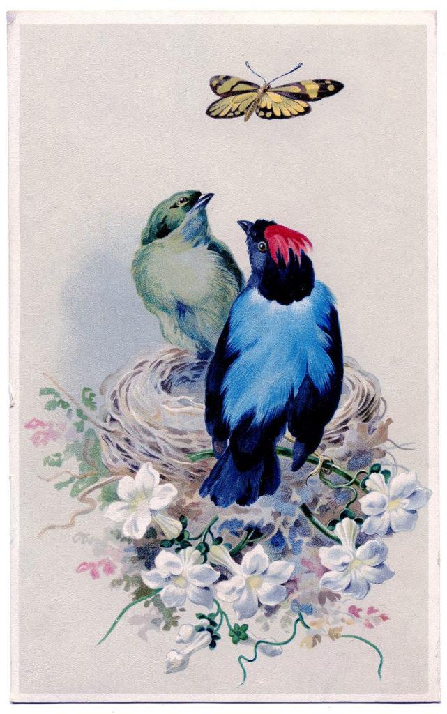 birds vintage next clipart