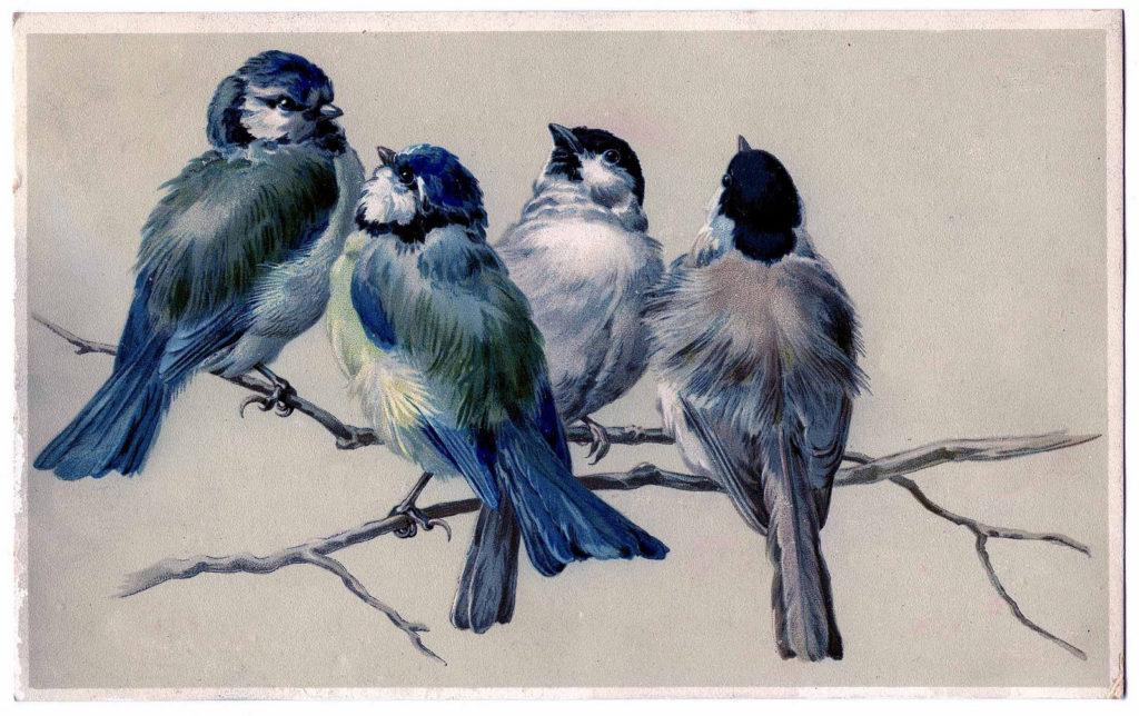 blue birds on branch illustration
