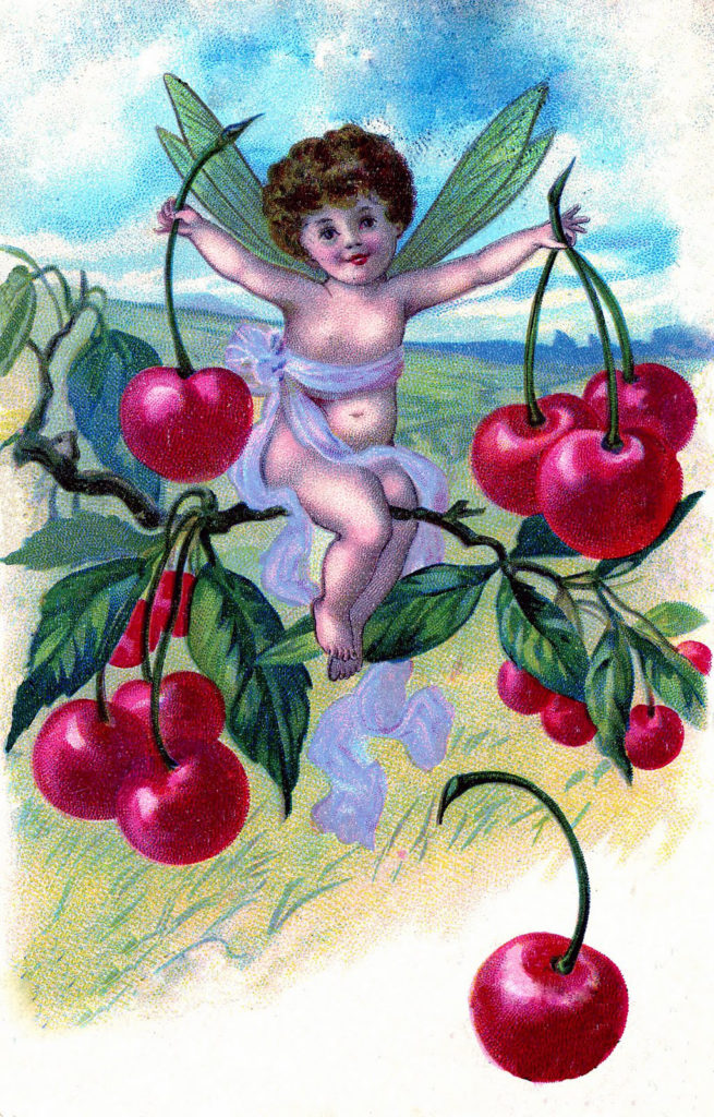 Fairy Cherry Cherries Vintage Illustration