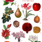 holiday fruits & flowers digital image bundle