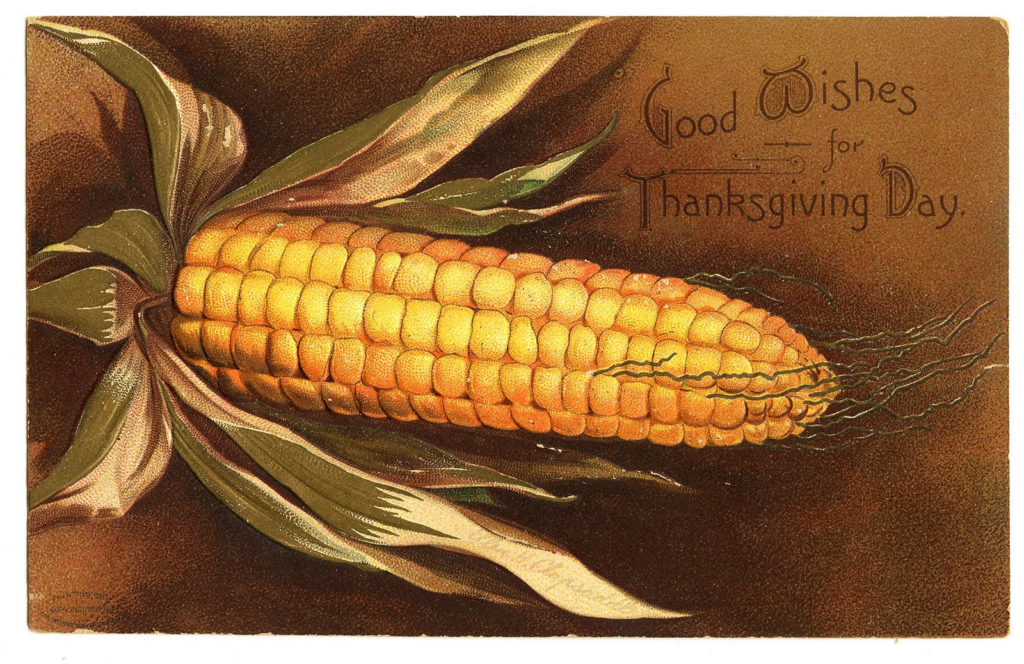 vintage thanksgiving corn image