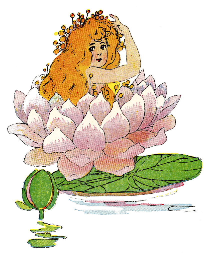 flower fairy water lily image