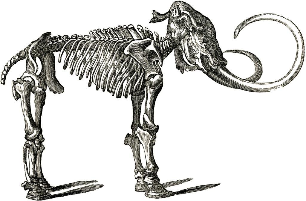 vintage mastodon black white clip art
