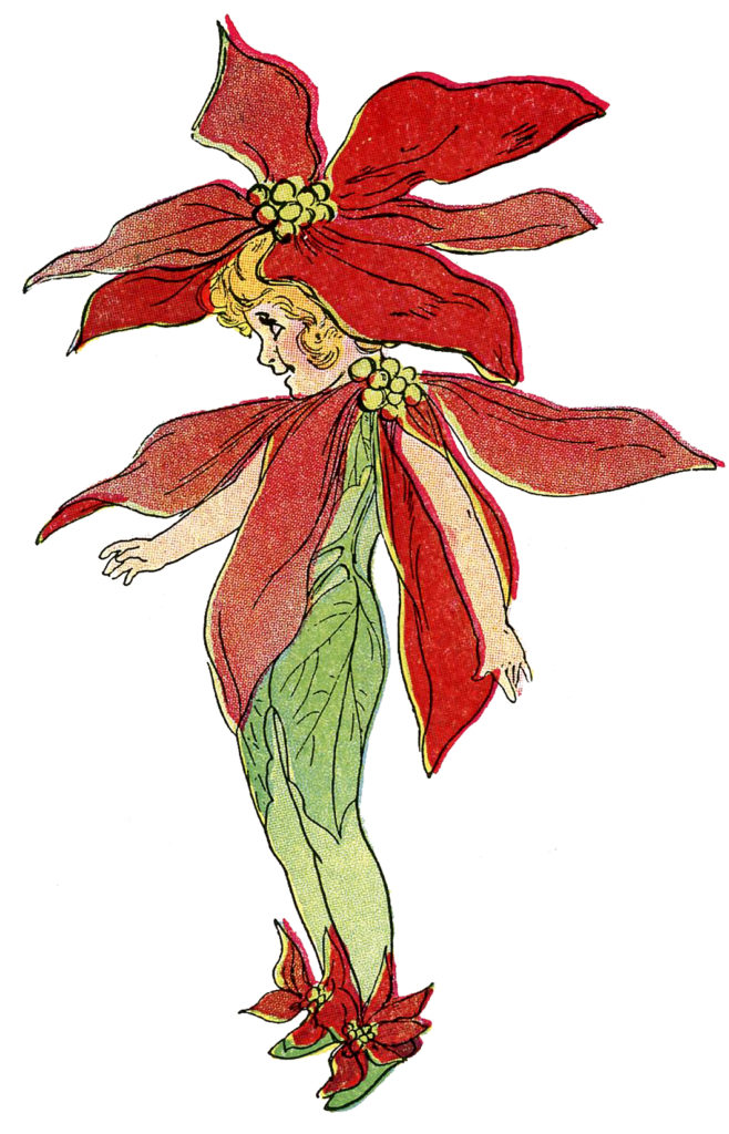 poinsettia flower fairy red image