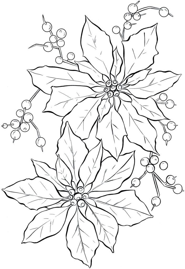 poinsettia line art coloring sheet image