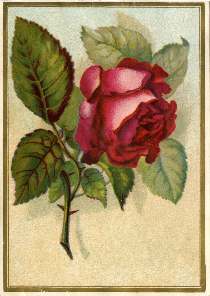 Vintage Christmas Red Rose Illustration