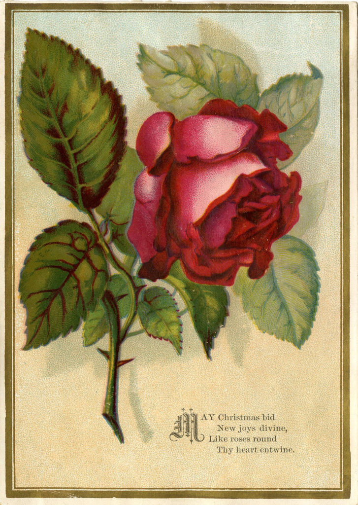 red rose vintage Christmas greeting image
