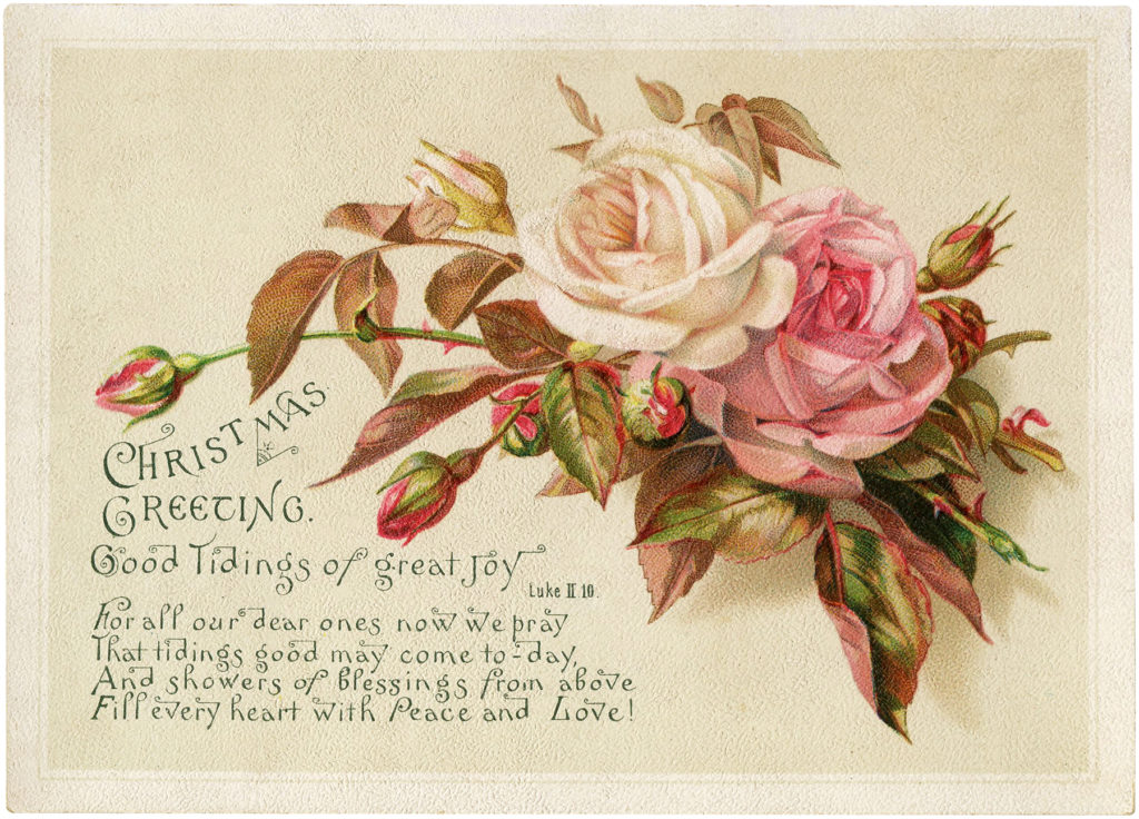 vintage pink white rose Christmas image
