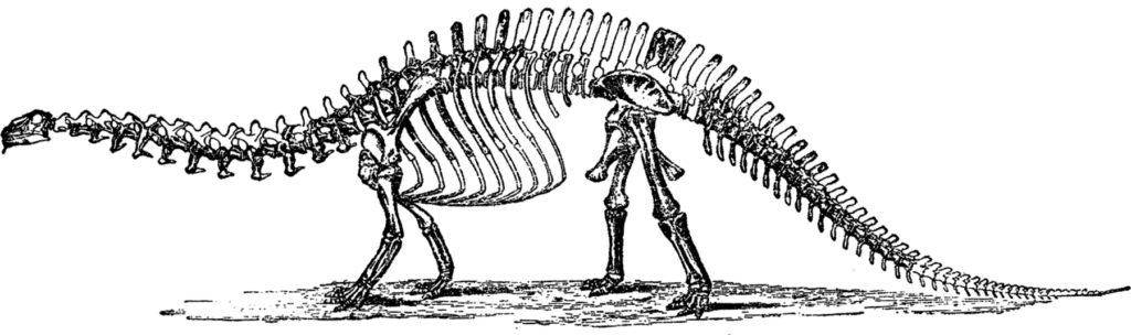 vintage brontosaurus bones image