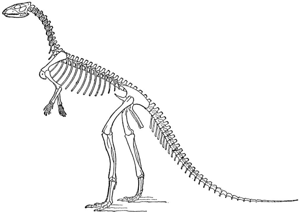 vintage laosaurus dinosaur image