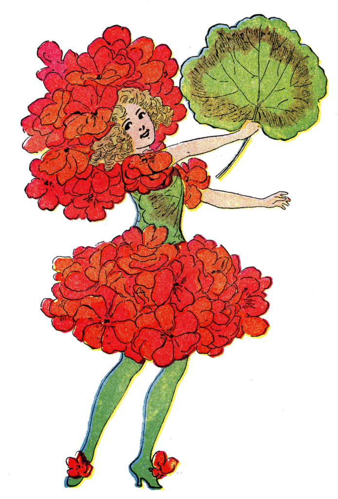 flower fairy gernaium red illustration