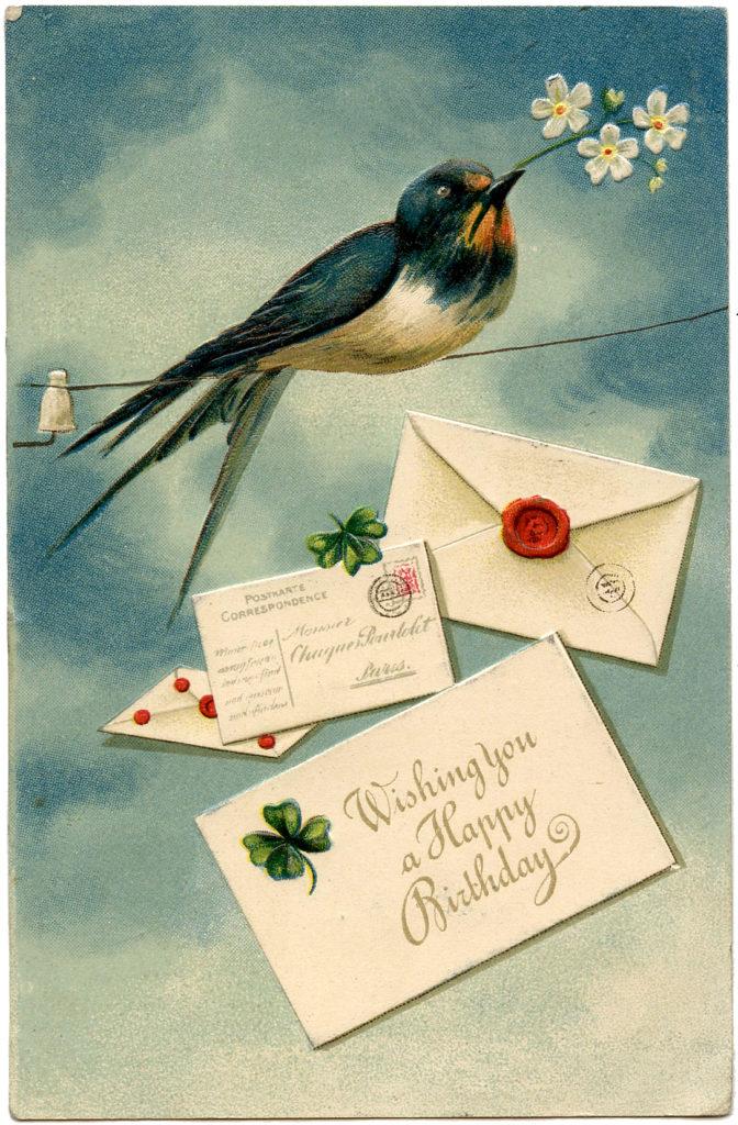 Swallow Bird Birthday Imag