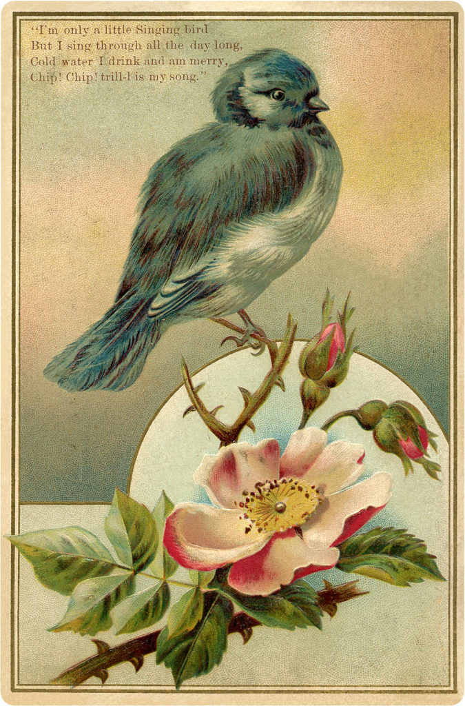 Bluebird with Rose Image